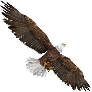 3D eagle bald model