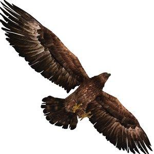 3D eagle bird