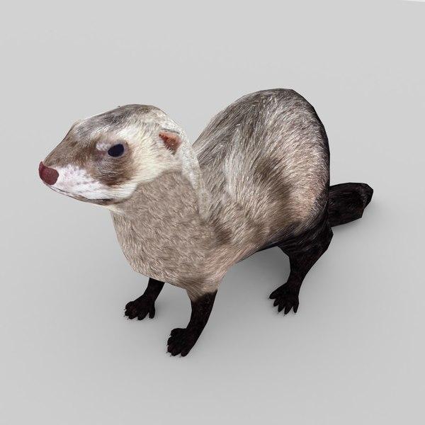 3D nature animal ferret model