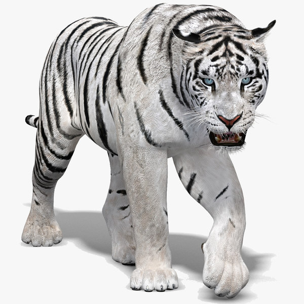 3D white tiger animation