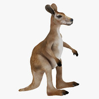 3D marsupial mammal kangaroo