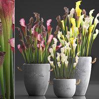 3D model exotic plants sarracenia