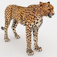 cheetah 3D model