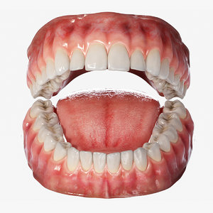 realistic human mouth tongue 3D model