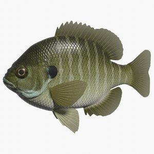 bluegill swimming 3d 3ds
