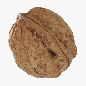 walnut nut 3D model