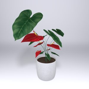3D anthurium flower plant