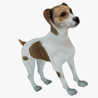 3D model danish-swedish farmdog dog