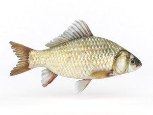 fish crucian carp 3D model