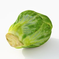 brussels sprout model