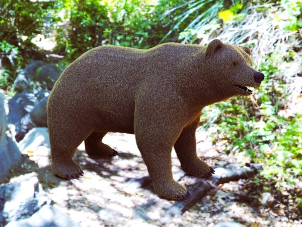 bear ready model