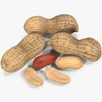 3D peanut seeds model