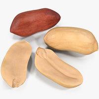 3D peanut seeds 2