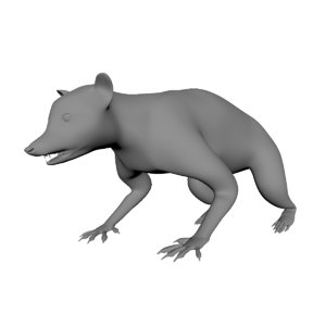 3D raccoon