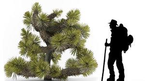 yucca brevifolia 3D model