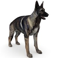 German Shepherd Sable
