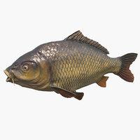 carp fish fins 3D model