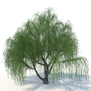 willow nature tree 3D model