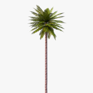 unreal date palm 3D