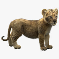 Lion  Cub Rigged