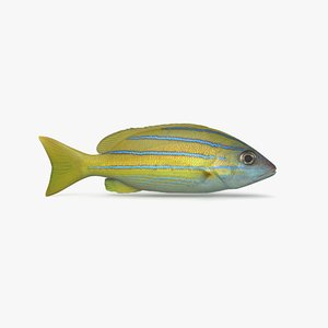 3D bluestripe snapper