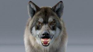 wolf hair fur 3D