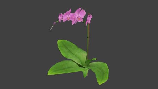 beautiful orchid model