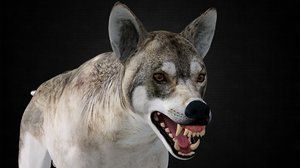 wolf v-ray 3D model