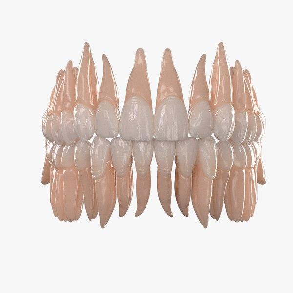 3D dentition teeth