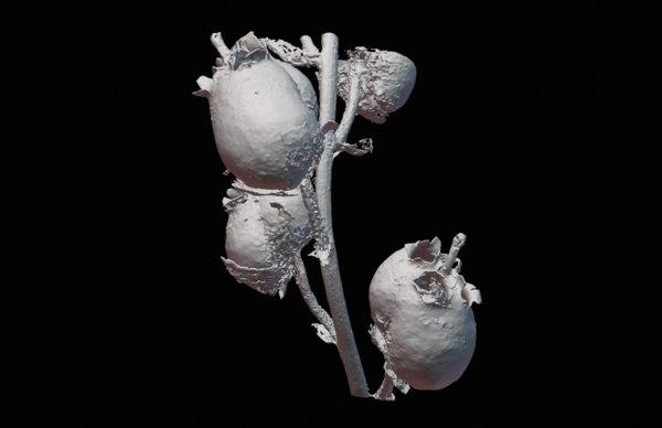 3D antirrhinum majus ctscan model
