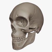 Human Skull (High Poly Model)