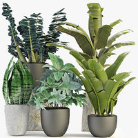 Collections Plants 3