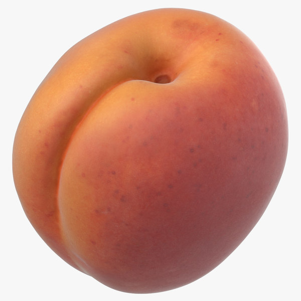 apricot small 05 3D