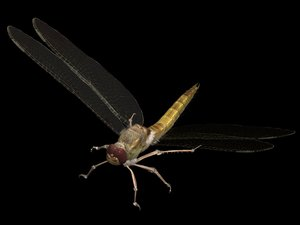 dragonfly 3D