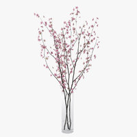 branches cherry blossoms model