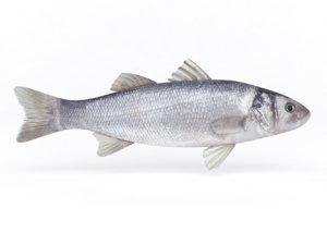 seabass fish 3D