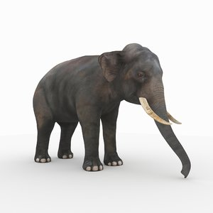 photorealistic elephant 2 3D