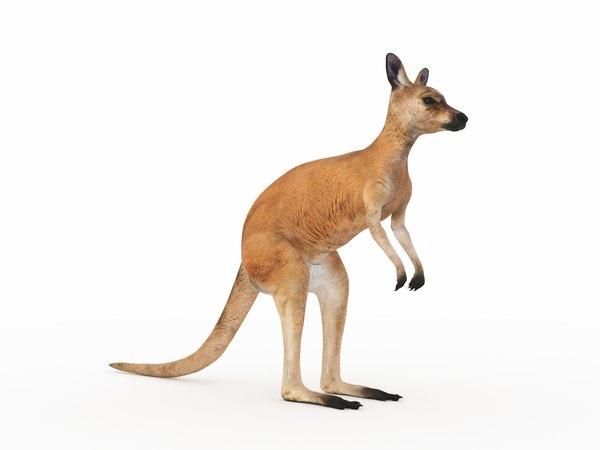 3D kangaroo