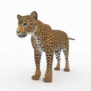 cat mammal animal 3D model