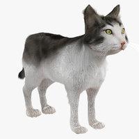 realistic cat fur 3D model