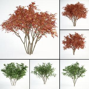 3D juneberry landscape planting