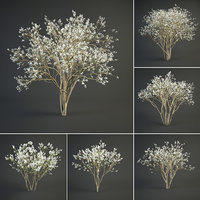 blooming juneberry model