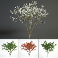 2 juneberry tree landscape model