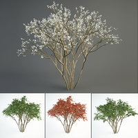 2 juneberry tree landscape 3D model