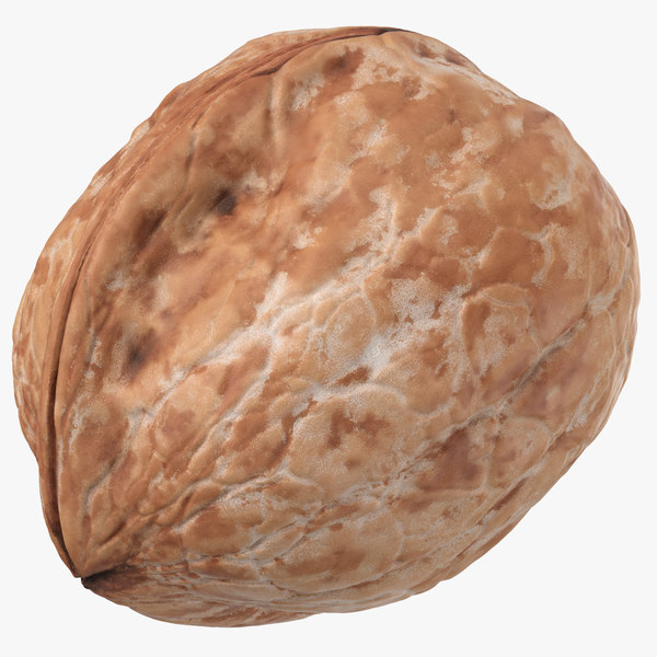 walnut 02 model