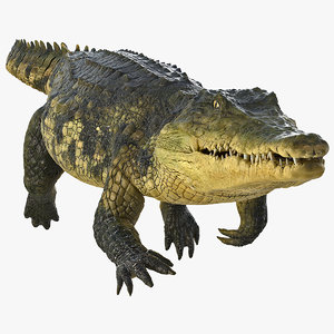 crocodile swiming animal rigged 3D model