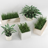 3D indoor plants model