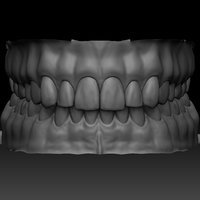 3D realistic human mouth zbrush model