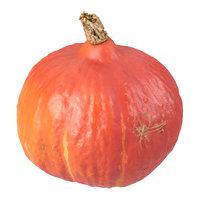 3D photorealistic scanned hokkaido pumpkin model