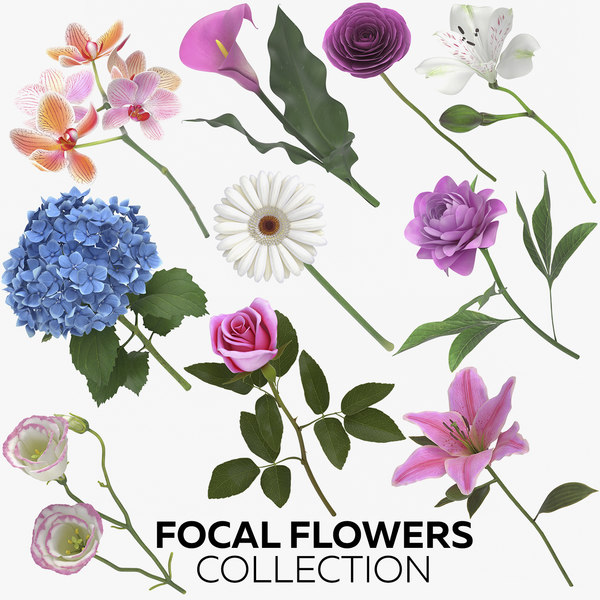 focal flowers - 73 model
